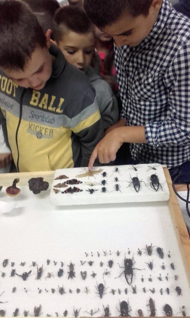 insektarijumnaucnidan2016